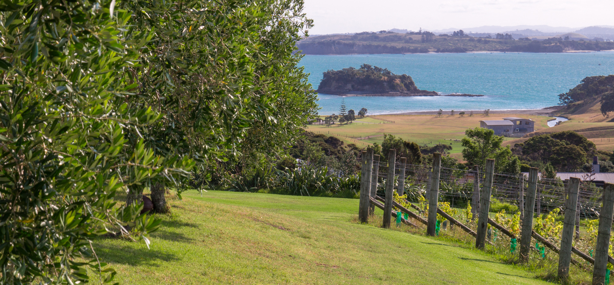 View of vines and sea from Cable Bay